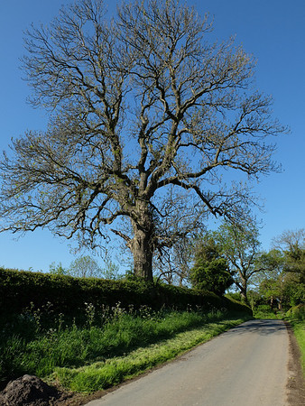Took this on a sunny bike ride to work. Somewhere between Leathley and Beckwithshaw