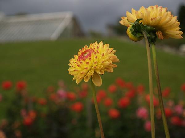 Flowers at Cragside
